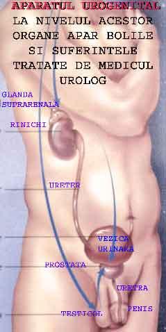 Sanador pret punctie prostata